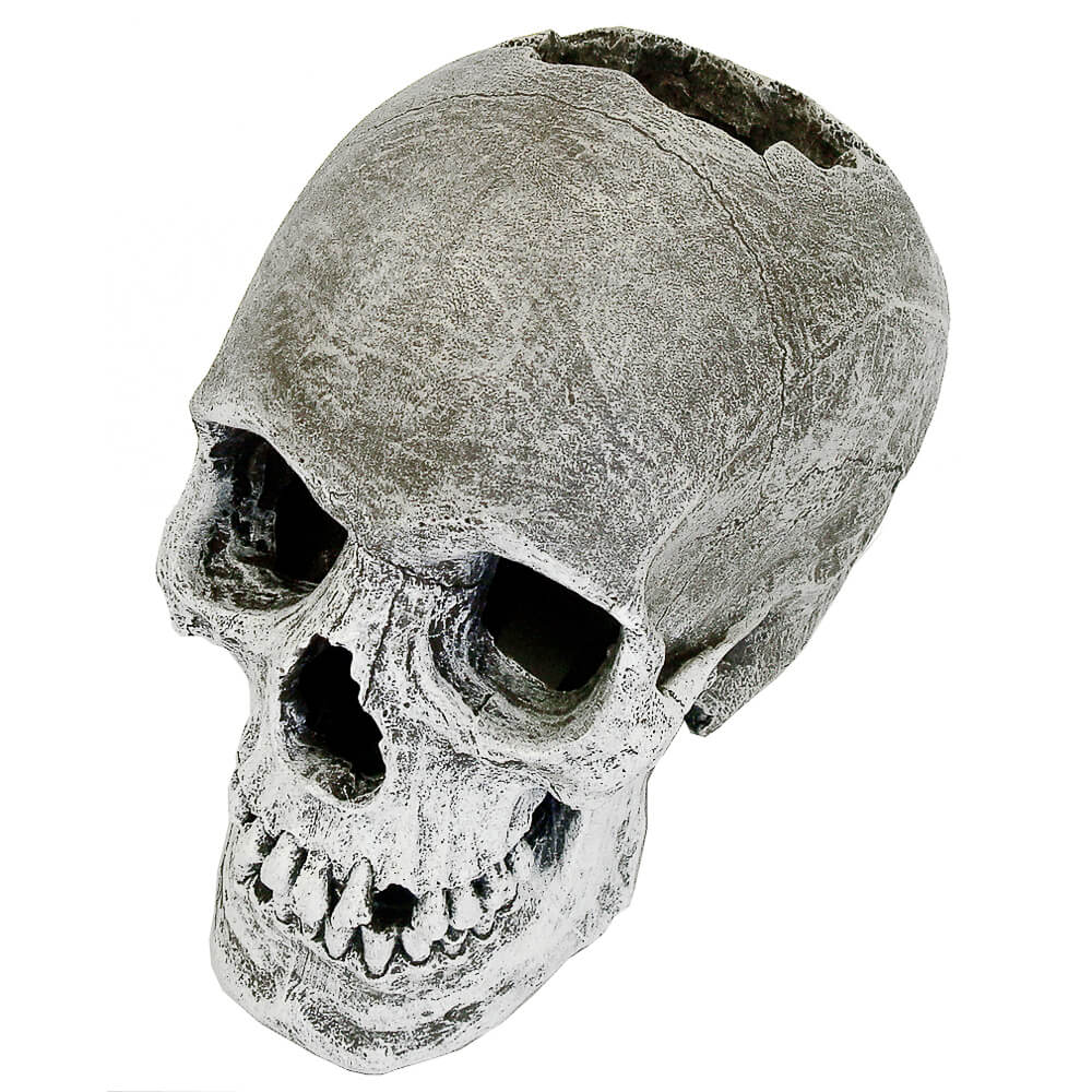 EE-358 - Exotic Environments® Life-like Human Skull
