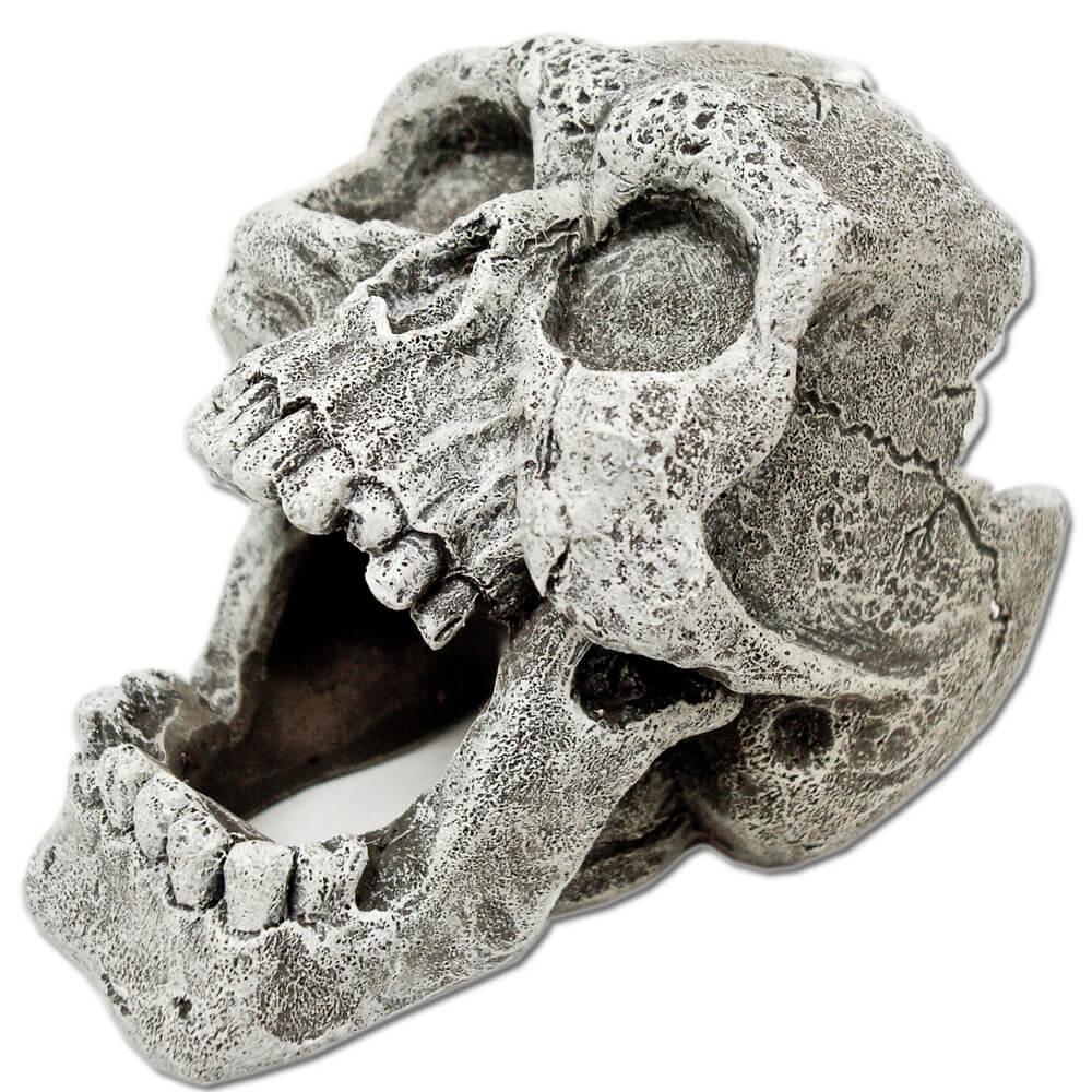 EE-816 - Exotic Environments® Cracked Human Skull Mini